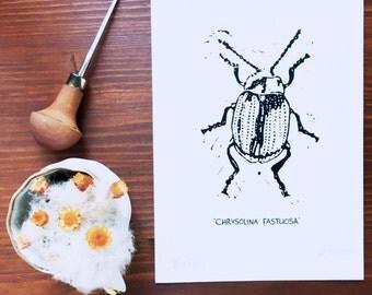 Limited edition Chrysolina Fastuosa print