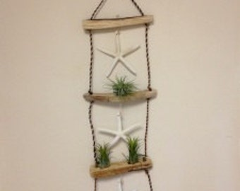 Air Plant / Ladder hanger with starfish and air plants