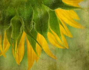 Sunflower,Yellow,Petals,Texture,Reatro,Rusty,Square,InstantDownload,,PrintableArt,Home Decor,Wall Decor,KitchenDecor,Gift idea,Fine Art