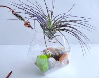 Hanging Air Plant Terrarium (Blood Orange Bead)