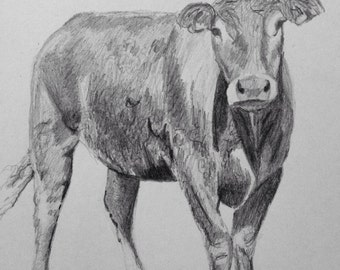 Print limousin cow pencil drawing