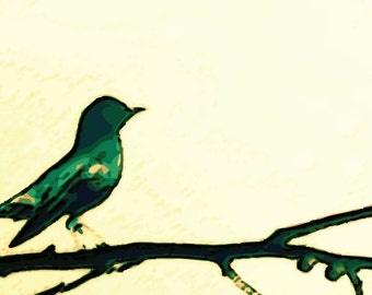 Bird - Digital Download