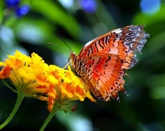 Butterfly Fresco