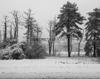 Trees Nature Photography Original Work Snow Black and Winter Acquiescence