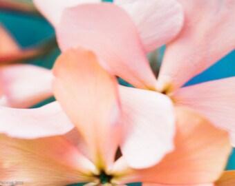Beauty Restores Faith