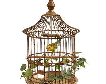 Taxidermy bird in antique cage