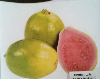 Red Tropical Guava Psidium guajava 25 seeds