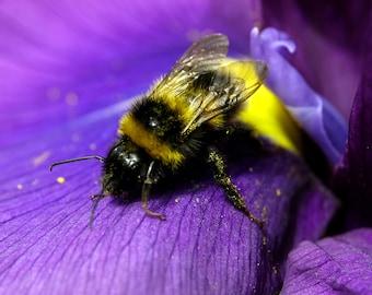 Macro Bee, Wildlife Photography, Nature Photography