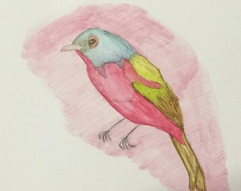 Watercolor bird greeting cards w/ envelopes