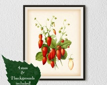 Berry print, Botanical art, Instant download vintage prints, Strawberry art, Antique illustration, Strawberry print, Kitchen wall decor, #31