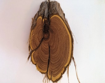 Greasewood Oiled Oval Wood Slice