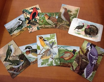 10 Vintage 1909 Bird Art Post Cards