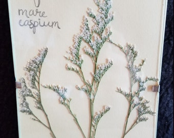 Framed pressed botanical print