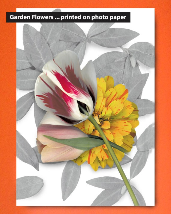 """Flower garden prints on paper. 8""""x10"""" and 11""""x14"""". Garden flowers that last. Tulip and Zinnia on photo paper. Sized for standard framing."""