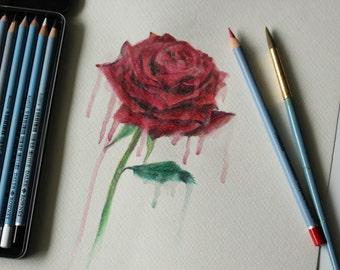 "Original Watercolour pencil drawing - ""Melting Rose"""