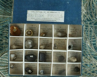 """Geological Samples, Victorian petrologist teaching aid """"British Fossils"""""""