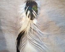 Cruelty free white peacock with back rainbow rooster feather single earring on a surgical steel finding.