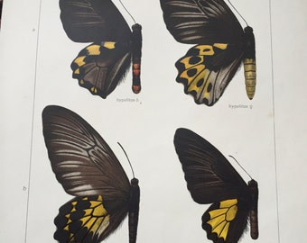 Butterfly Prints 1930