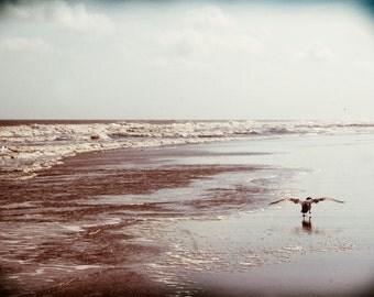 Seagull, Coast, Blue, Flight, Fine Art Print, Ocean, Sea, Vintage