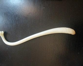 Real Bone Penis Raccoon Baculum Taxidermy