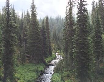 Yellowstone National Park Photograph