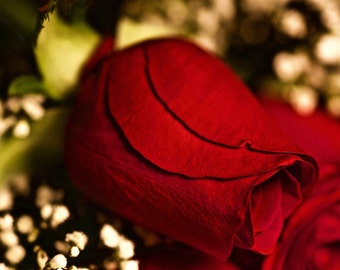 Red Rose Photograph - Flower Photography