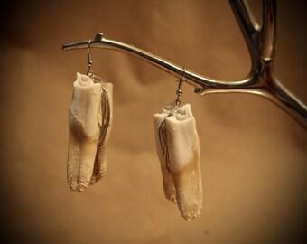 Elk Teeth Earrings (A)