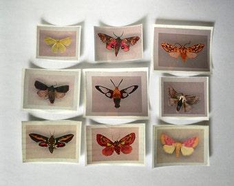 vintage national geographic moth sticker set (9 pack)