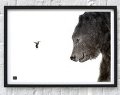 Bear and hummingbird pencil drawing Print, Original drawing A2 print, Black and white Bear and bird, highly detailed animal drawing