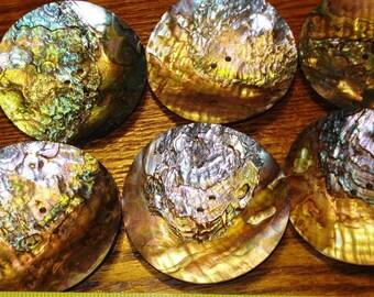 3'' Large Abalone shell Disc