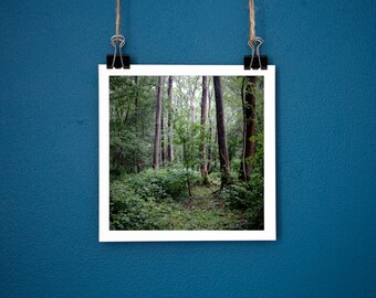 "Nature Photography Ancient Woodland. Print 5""x5""."