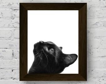 Animal print, cat print, nursery decor, animal art, animal wall art, nursery wall art, baby room print, baby room wall art, cat printable