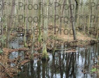 """Georgia Swamp Lithograph 24"""" x 30"""""""