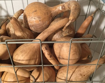 DIY cleaned and dried gourd