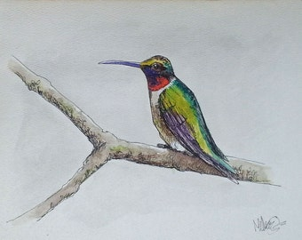 Ruby Throated Hummingbird Pen and Ink Watercolor Painting