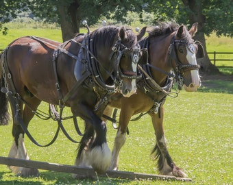 Working Horses gloss print
