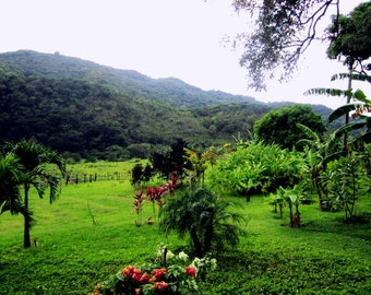 Photography Trees Mountain Dominican