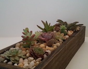 "16"" beautiful succulent planter"