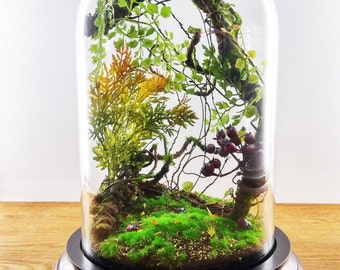 terrarium forestiers de plantes artificielles cabinet de. Black Bedroom Furniture Sets. Home Design Ideas