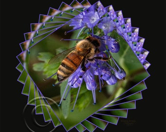 Circle of Life, flowers,bee,yellow jacket,photo,photo art,color,wall picture,Home Decor, Home Decor Office,Gift,Award Winning,Vertical