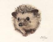 Henry the Hedgehog -  Greeting card from my painting   ( wildlife, bird, animal, dog, butterfly, wildlife art, hedgehog )