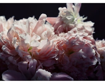 Nature Photograph - Peony Photograph - Flower Photograph - Spring - Pompon - Fine Art Photograph - Alicia Bock - Floral Art - Oversized Art