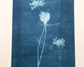 Large Queen Anne's Lace Cyanotype No. 23