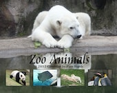 2017 Wall Calendar - Zoo Animals