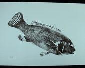 Original Salt Water Black Fish or Tautog Fish Rubbing (GYOTAKU) on light blue cover stock 23 X 35