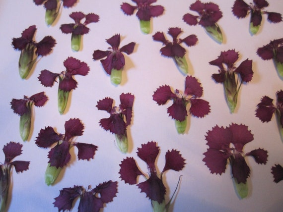 Dried Pressed Flowers For Crafting Real Natural Pink