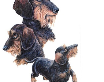 DACHSHUND WireHair Multi-DOGs on Twelve Identical 6 inch Fabric Squares for Quilting and Sewing