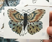 Butterfly NASHIRA, miniature small watercolor painting