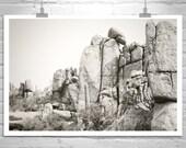 Fine Art Photography, Arizona, Desert, Landscape, Tucson, Fine Art Print, 11 x 17, 16 x 24, 20 x 30, 23 x 36, 32 x 48, Murray Bolesta, Cacti