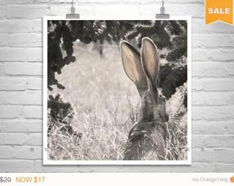 Sale 15% Bunny Picture, Tucson Arizona, Jackrabbit Picture, Arizona Wildlife, Rabbit Picture, Desert Wildlife, Square Art, Murray Bolesta